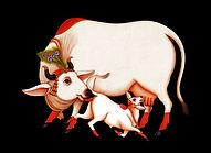 cows4a (2).jpg