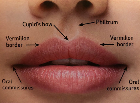 LIP ANATOMY! To provide the best lip filler treatment it's understanding the natural anatomy!