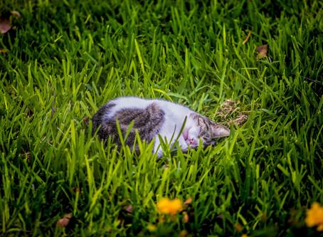 Parque Kennedy สวนแมวในฝัน @Peru