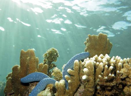 """อุทยานแห่งชาติทางทะเล """"Teluk Cenderawasih National Park""""@Indonesia"""
