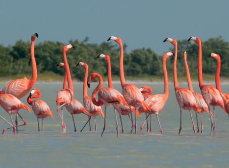 Ría Lagartos Biosphere Reserve พื้นที่ชุ่มน้ำที่สำคัญของโลก @Mexico