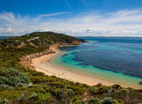 Phillip Island ชมพาเหรดของนกเพนกวิน @Australia