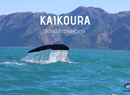 Kaikoura สถานีล่าวาฬหัวทุย @NewZealand