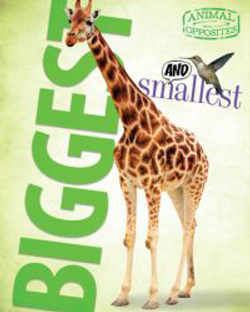 AO_biggest_cover