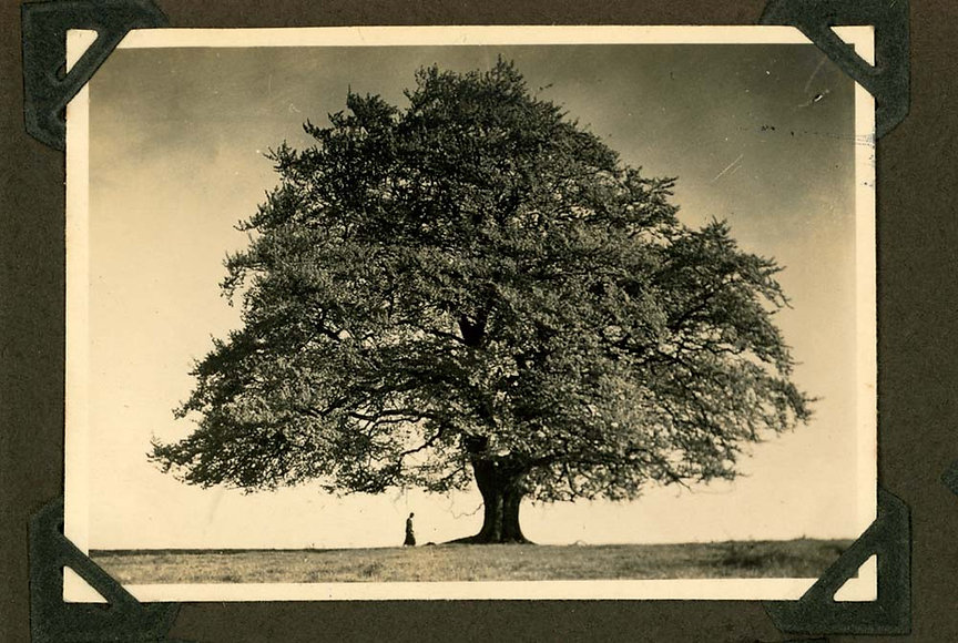 ivy album134.jpg