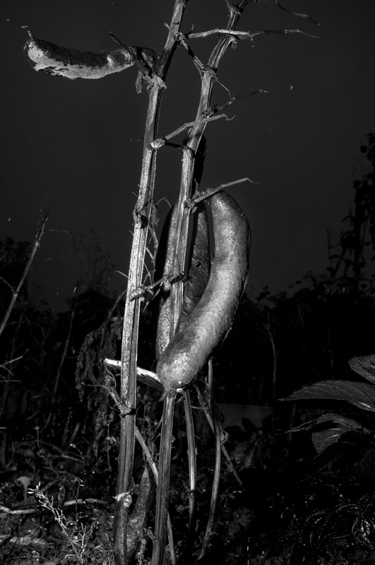 allotments15.jpg