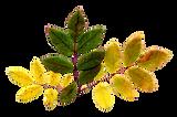Dry Leaf