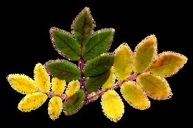 Arbres et arbustes