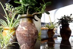 web-plants