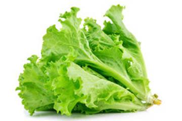 Lettuce 250gm