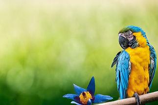 parrot-5954166_1920.jpg
