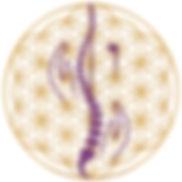 Anne Florence Vanden Perre, Ostéopathie quantique, libération coeur-péricarde, bars d'access consciouness, SOAthérapie, ostéopathie énergétique,