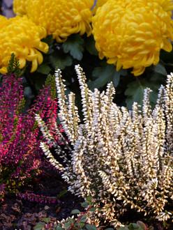 Herbst- und Winterbepflanzung