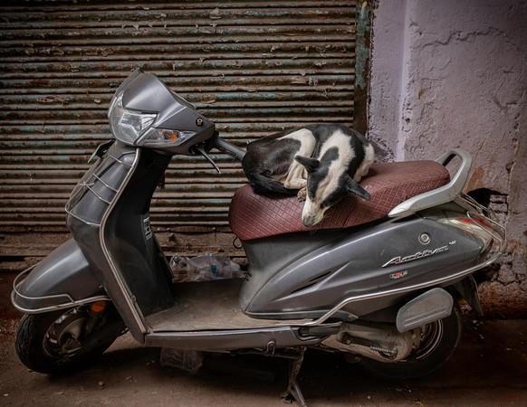 0555_Delhi Dog on Motorbike_COL_22 x 17.