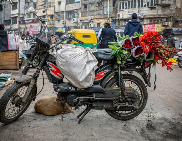 0427_Delhi_Motorbike Flowers_COL_22 x 17