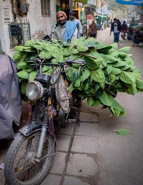 0244_Delhi Motorcycle Leaves_COL_17 x 22