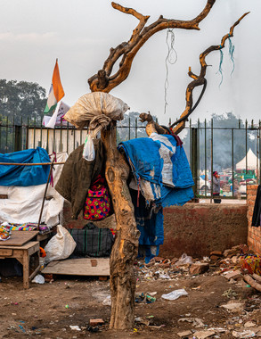 0631_Delhi Tree with Laundry_COL_17 x 22