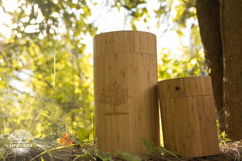 Eco Burial y The Living Urn