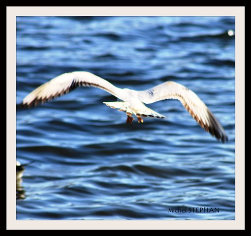 Oiseaux_Relecq_Kérhuon_viaduc_(54)_InPixio