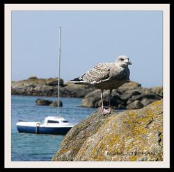 Oiseau de Mer (7)