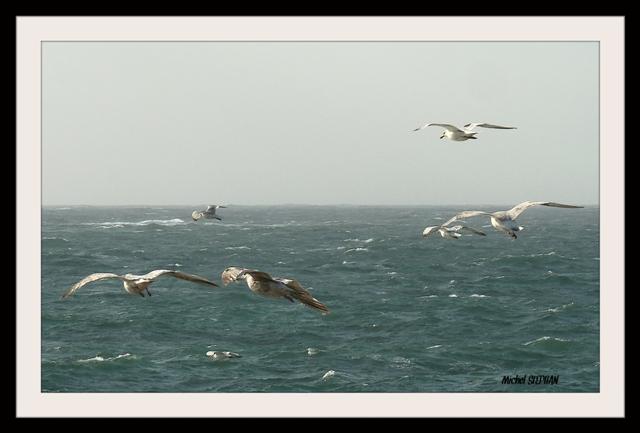 Oiseaux Porspoder_InPixio