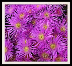 Fleurs mauves_InPixio