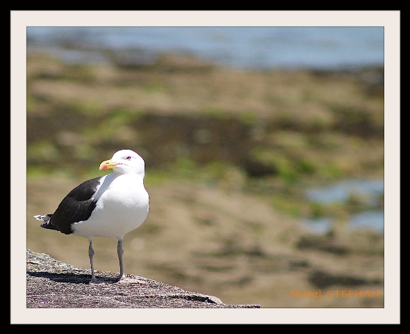 Oiseau de Mer (6)