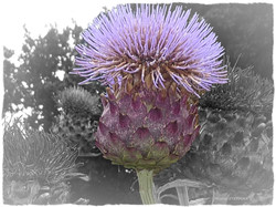 Fleur Artichaud 60x80 xigné