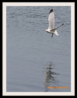Oiseau de Mer (5)