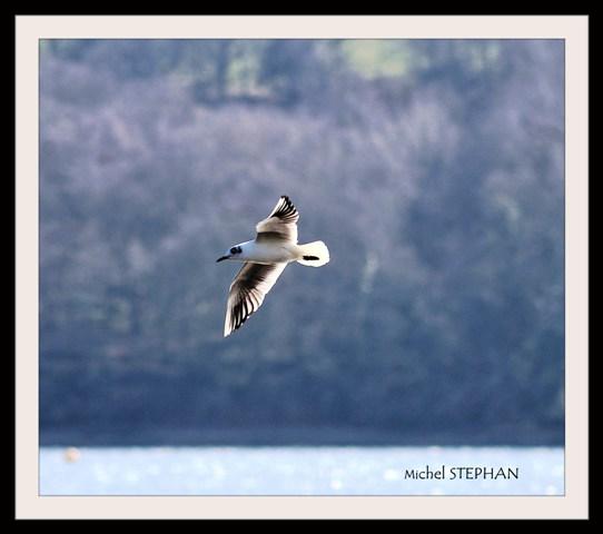 Oiseaux de Guipavas Le Douvez (3)_InPixio
