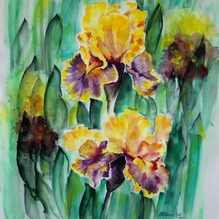 Iris jaunes Aquarelle  70x50.JPG