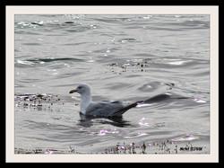 oiseau (3)