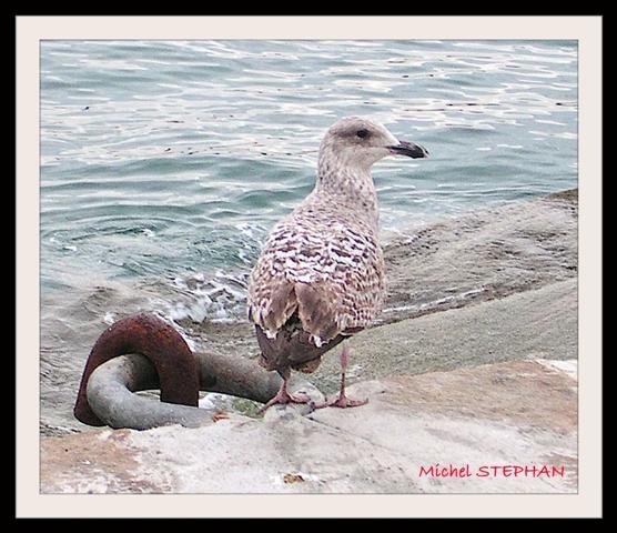 Oiseau de Mer (9)