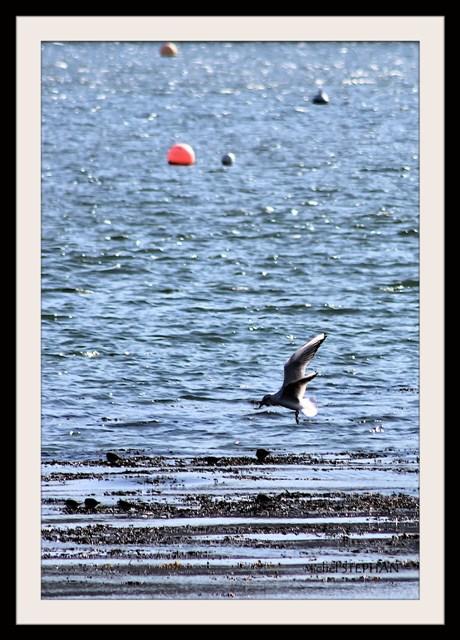 Oiseaux de Guipavas Le Douvez (1)_InPixio