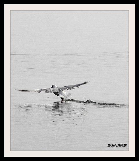 Oiseaux Plougastel 24 08 2017 (19)_InPixio