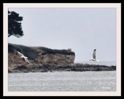 Oiseaux mouettes_InPixio
