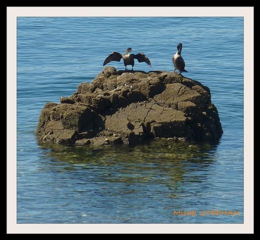 Oiseau de Mer (8)