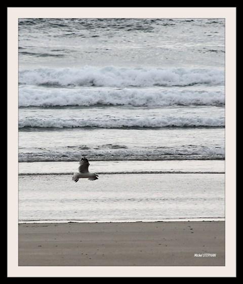 Oiseaux mouette_InPixio
