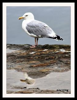 Oiseau_Plougastel_four_à_chaux