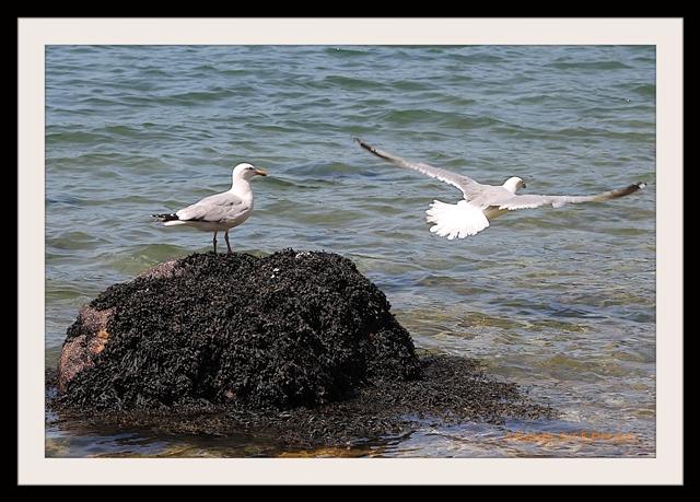 Oiseau de Mer (4)