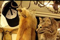 Hat or fox collarPEQ.jpg