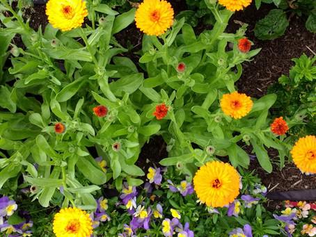 June 2019 - Flower blog