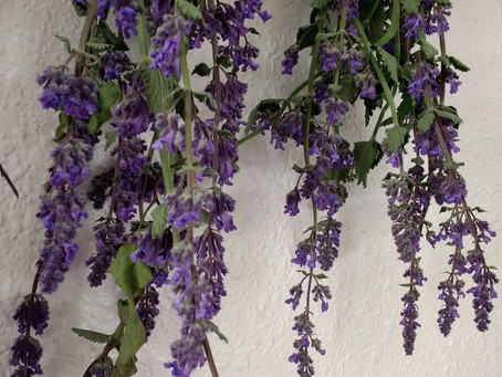 Drying Herbs and Flowers - Hanging Method