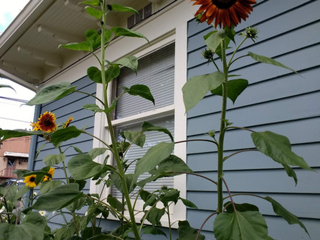 August 2019 - Flower Blog