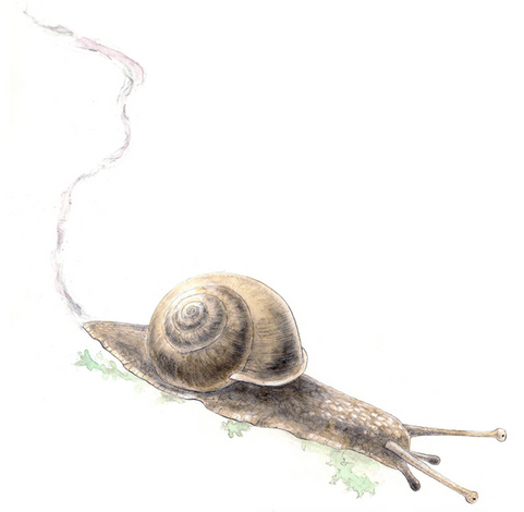 Snail and its trail