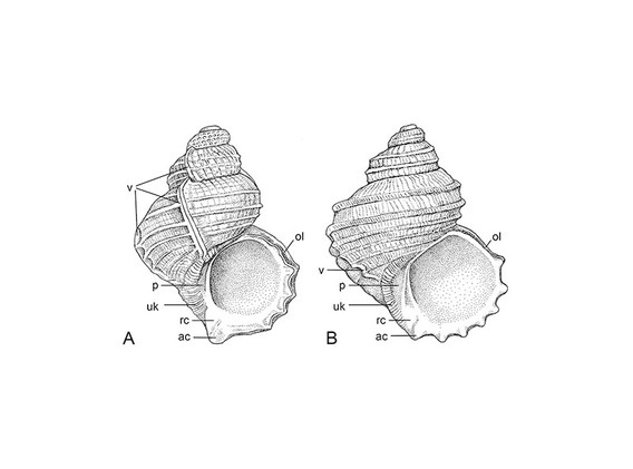 Crosseolids comparison