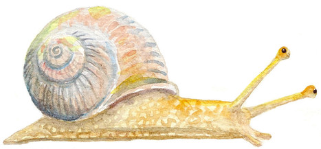 Whimsical snail
