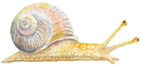 Whimsical snail