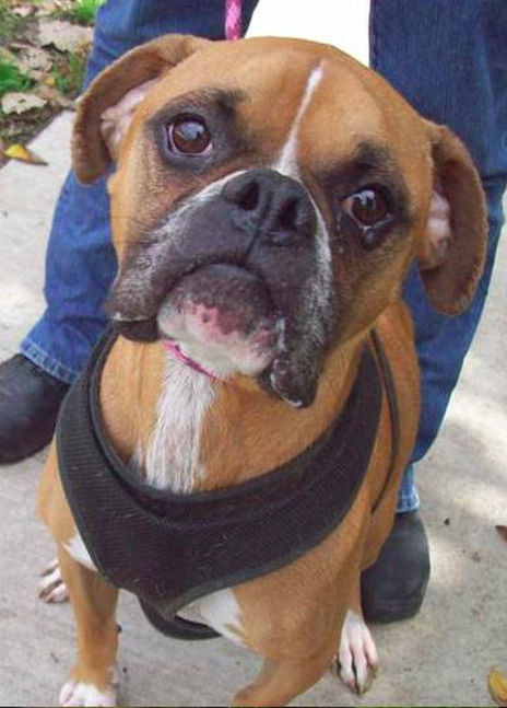 Adopt Rooke - Rescue Pet of the Week! | Professional Pet Sitters, Inc. | Chicago