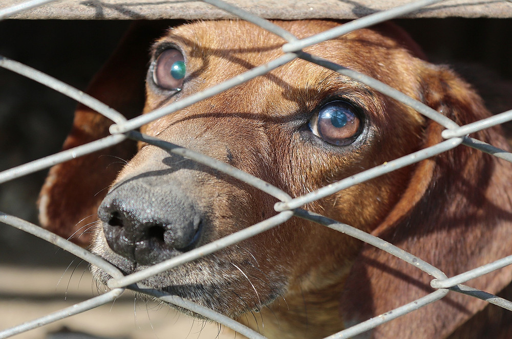 Overturning The Ban of Puppy Mill Dogs in Pet Stores | Professional Pet Sitters Inc. Chicago